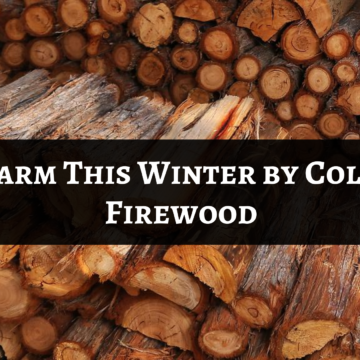 Keep Warm This Winter by Collecting Firewood